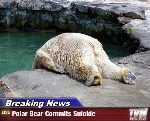 suicidal-bear